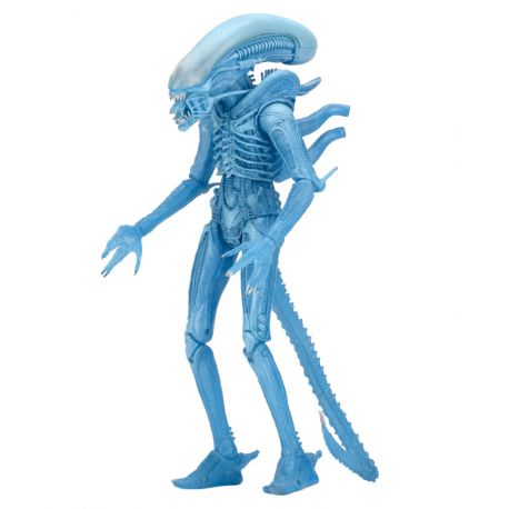 Aliens série 11 figurine Warrior Alien (Kenner) Neca
