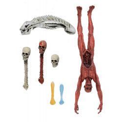 Predator accessoires pour figurines Deluxe Accessory Pack Neca